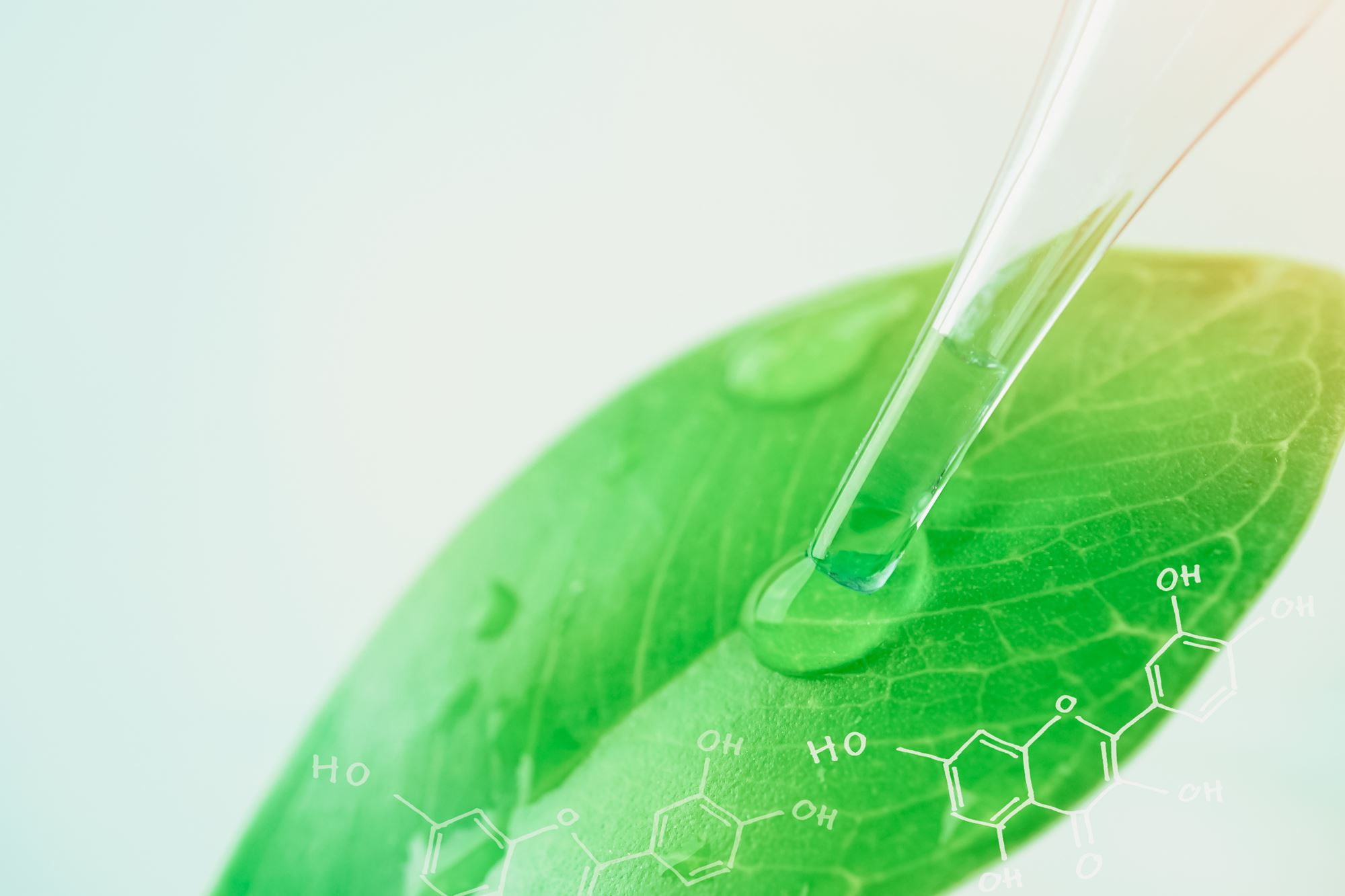 HOMEOGUM : Le 1er complément alimentaire efficace alliant Homéopathie et Phytothérapie