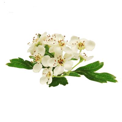 Homeogum, un produit en homeopathie qui utilise l'aubépine