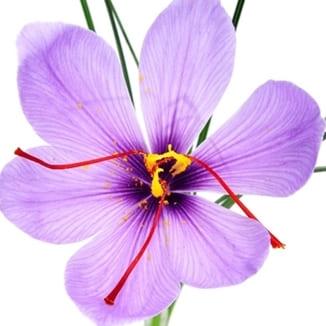 antidépresseur pour ce remède naturel en homéopathie et phytothérapie